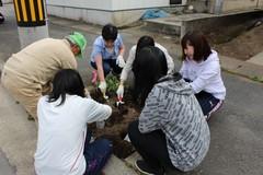 H28年度 松コミ植栽4